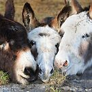 Three  Amigos by EUNAN SWEENEY