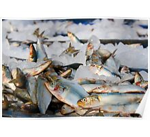 Fish Fish Fish!! : Freezing here Poster