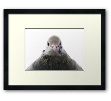 Pidgeon Framed Print