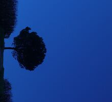 tree in blue by nicandgil