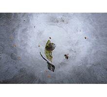 Birdbath Photographic Print