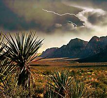 Desert Storm by Stephen Warren