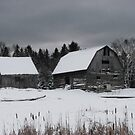 Old barn and horse by Jim Cumming