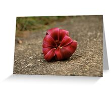 Magnolia Blossom,  Greeting Card