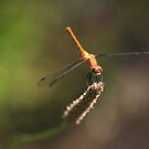 Dragonfly by Jim Cumming