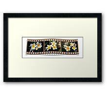 Just your plain 'ol every day white frangipani Framed Print
