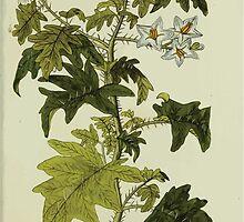 Plantarum Indigenarum et Exoticarum - Lukas Hochenleitter und Kompagnie 1788 - 360 by wetdryvac