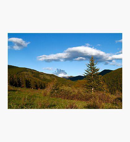 Wild coniferous  Photographic Print