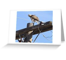 Red-Tailed Hawk giving me the eye Greeting Card