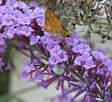 Butterfly Bush by art2plunder