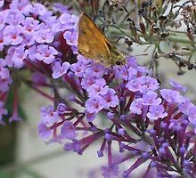 Butterfly Bush by art2plunder