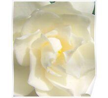 Gardenia Bloom Poster