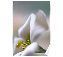 Soft on Lisianthus Poster