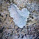 Heart on stone by Susana Weber