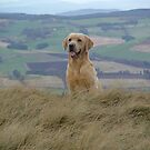 obedient gundog by weecoughimages