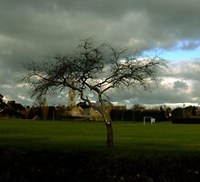 The tree that stands still. by Ruth  Jones