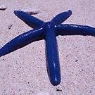 Blue Starfish Vanuatu by frenzix