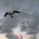 Peaceful Flight by Happywoman
