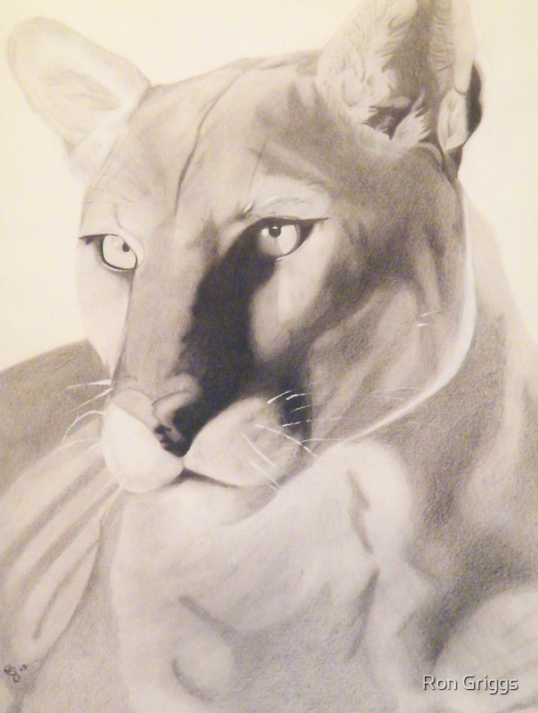Regal- Cougar by Ron Griggs