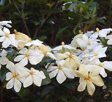 flowers by ashlieghlloyd
