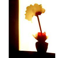 Shadow Flower Photographic Print