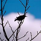 Starling silhouette by evilcat