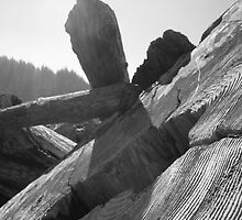 Driftwood - Redwoods National Park, California by bengranlund