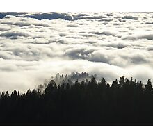 In the Midst of Giants -  Sequoia National Park, California Photographic Print