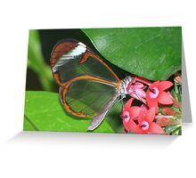Glasswing 01 Greeting Card