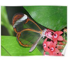 Glasswing 01 Poster