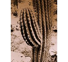 High & Dry Desert Flower Photographic Print