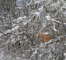 Orange shelter by Liezh