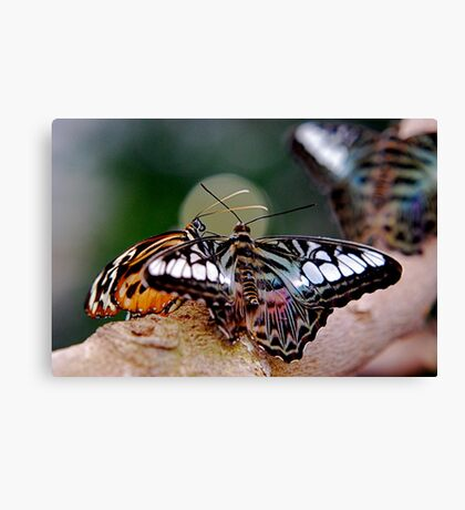 Butterfly Gossip Canvas Print