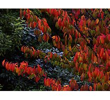 Autumn leaves.............! Photographic Print