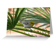 Verdin ~ Adult Greeting Card