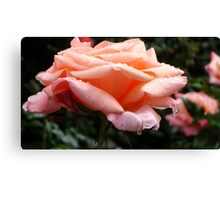 Rosewater | Nature Canvas Print