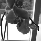 black&white orchid by Sherry Freeman