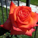 Romantic and beautiful by Esperanza Gallego