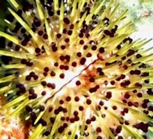 Jewell Sea Urchin on a Coral Reef Sticker