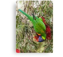 Rainbow Lorikeet 2 Canvas Print