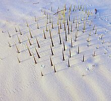 Soaptree Yucca, Buried by Mike Norton