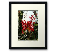 Holly Berries | Nature Framed Print