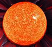 SUN Sunflower Sticker