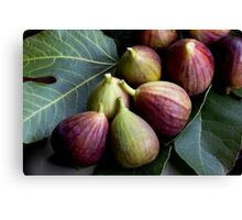 Figs and Leaves Canvas Print
