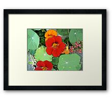 Colours of the Garden Bed Framed Print