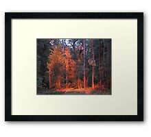 Morning Light - Bowen Mt, NSW, Australia Framed Print