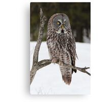 Great Grey Owl portrait Canvas Print