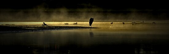 Herons in the Mist by Annie Lemay  Photography