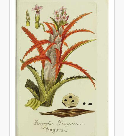 Plantarum Indigenarum et Exoticarum - Lukas Hochenleitter und Kompagnie 1788 - 016 - Bromelia Pinguin or Penguin Sticker