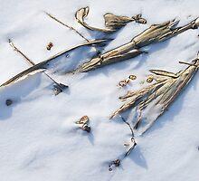 Winter Archeological Findings by Marilyn Cornwell